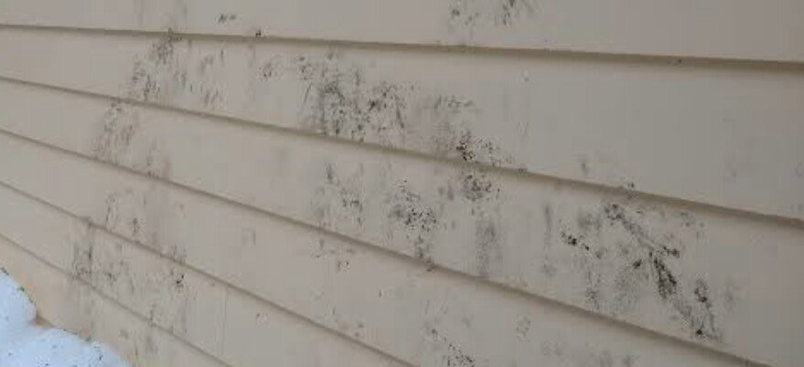 mould and mildew on your cladding