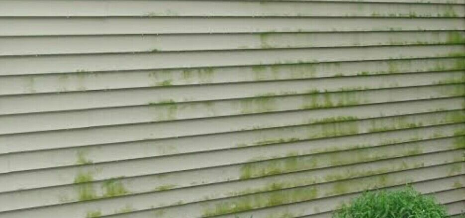 algae on cladding