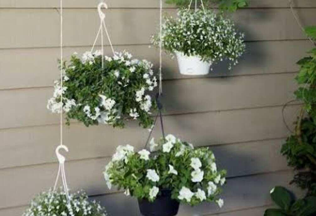 hanging flowers in garden