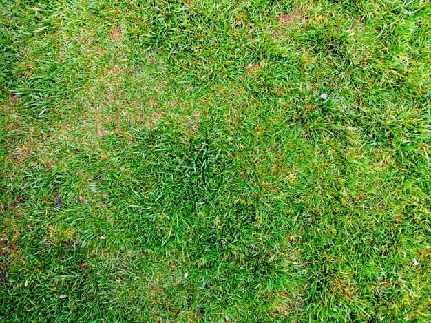 where homeowner can use artificial grass