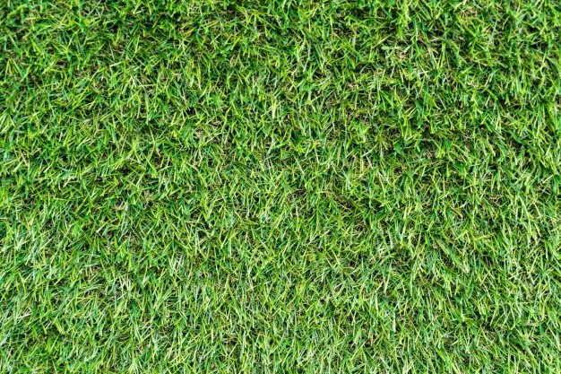 dogs poop and pee on artificial grass